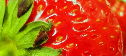 イチゴのキモチ.JPG