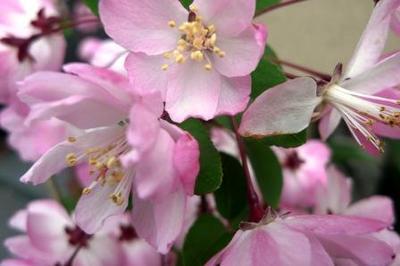 桜接写01.jpg