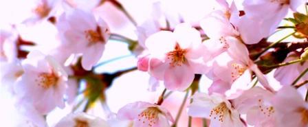 桜3☆.jpg