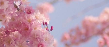 桜5☆.jpg