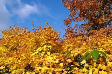 00-2010-10-7-ニセコ 096.jpg