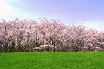 10-戸田記念公園桜 012.jpg