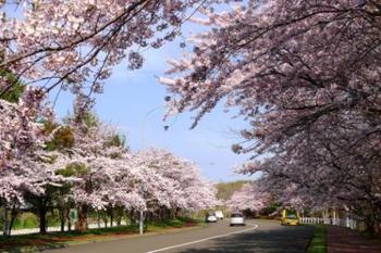 10-戸田記念公園桜 062.jpg