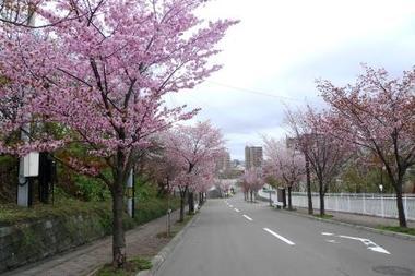 10-5-13maruyamasakura.jpg