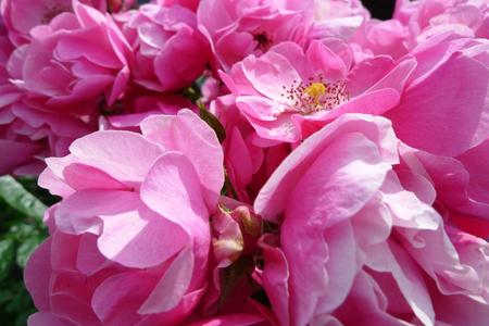 10-6-Flower01.jpg