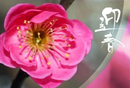 2010ブログ用年賀状.JPG