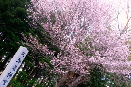 2010-札幌桜 006-WEB.jpg