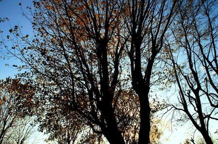 2011-11-16 005.jpg