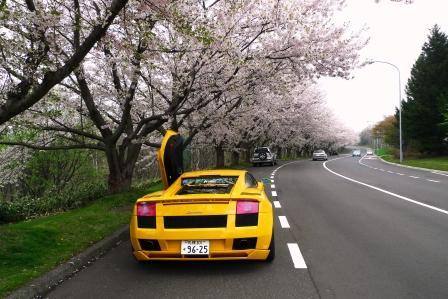 2011-5-20-戸田桜 001.jpg