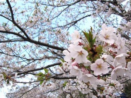 2011-5-NAOTOパーティ&戸田桜 130.jpg