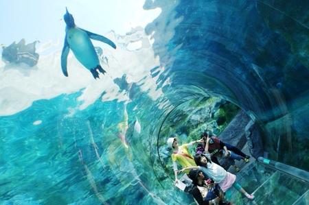 2012-6-5旭山動物園.jpg